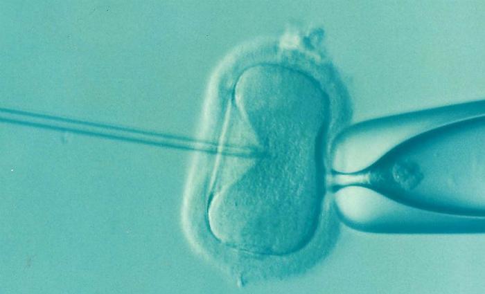 Pour la FIV, l'implantation d'un embryon sain