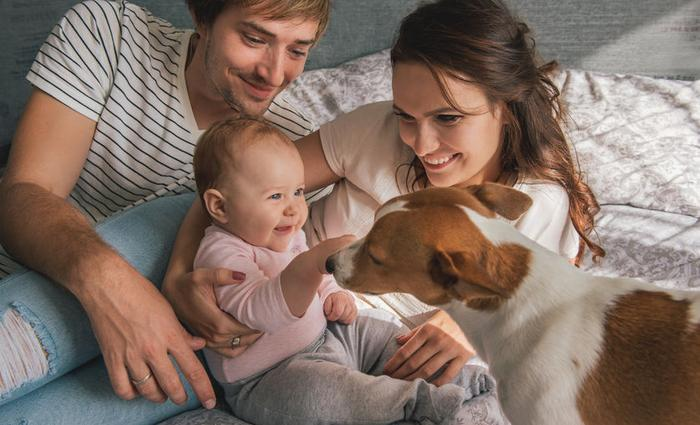 Comment préparer votre chien à l'arrivée de bébé?