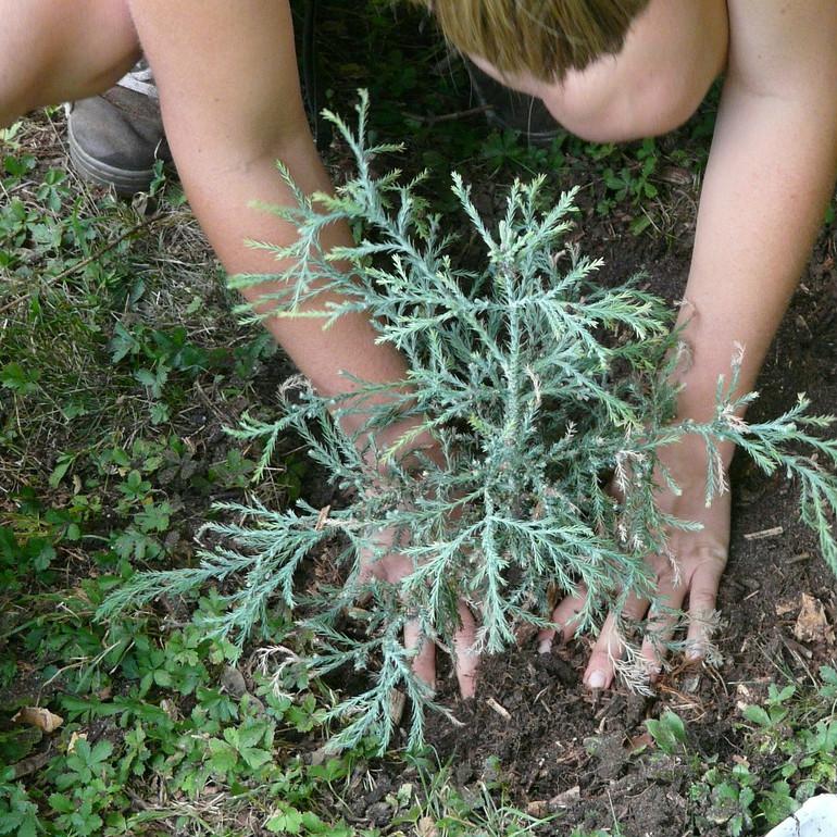 planter un arbre pour une naissance
