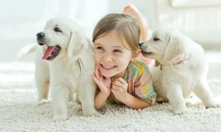 huisdier kiezen voor een gezin