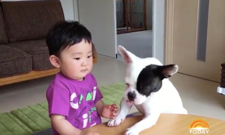 Hap, slik, weg: hond toont (op zijn manier) berouw aan jongetje