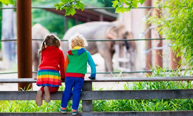 De leukste dierentuinen van Nederland