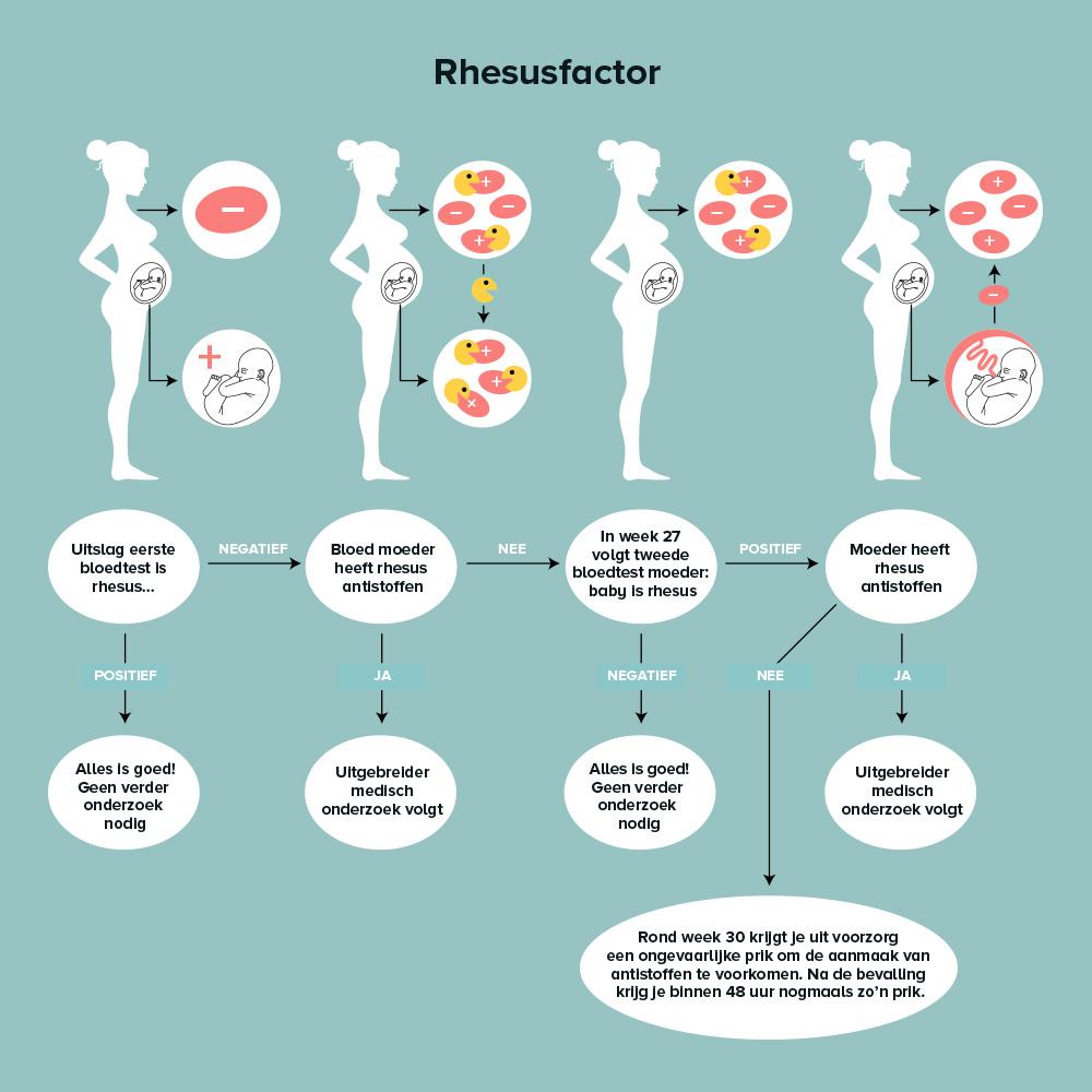rhesusfactor schema