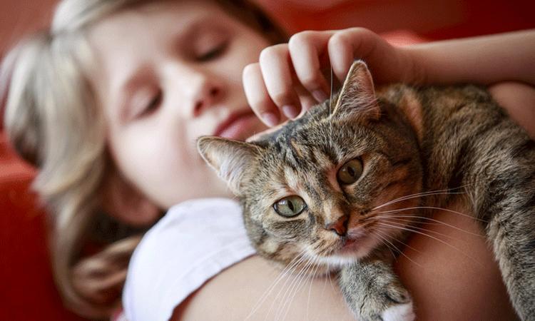 Kind gekrabd door de kat? Pas op voor de kattenkrabziekte!