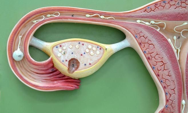 ICSI (Intracytoplasmatische Sperma-injectie)
