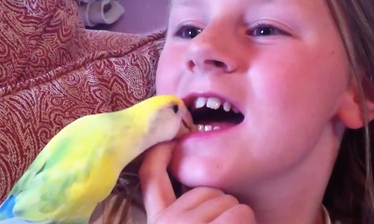 Creatieve manieren van kinderen om hun loszittende tand te verliezen