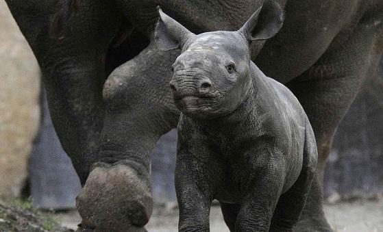 leukste dierentuinen