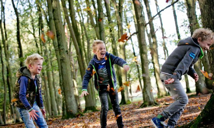 10x de leukste boswandelingen met kinderen