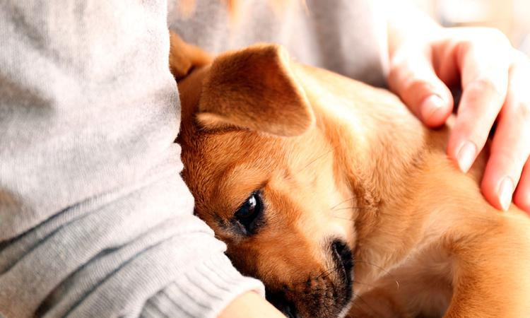 Voelen huisdieren dat je zwanger bent?