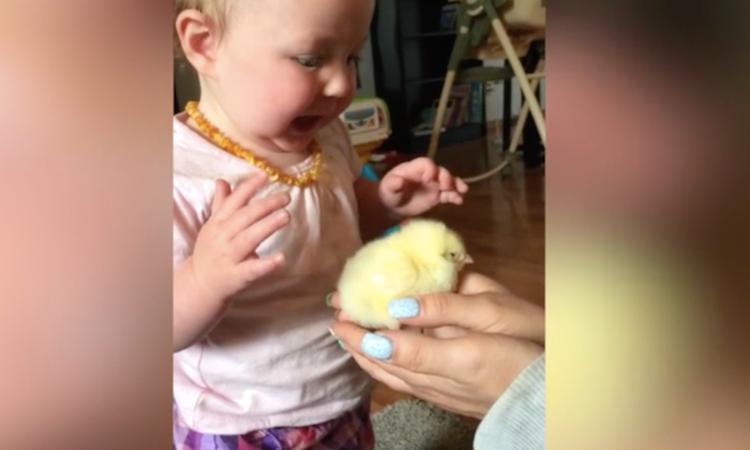 Baby ziet voor het eerst een kuikentje