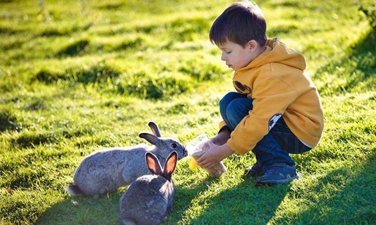 Kind met autisme socialer dankzij huisdier