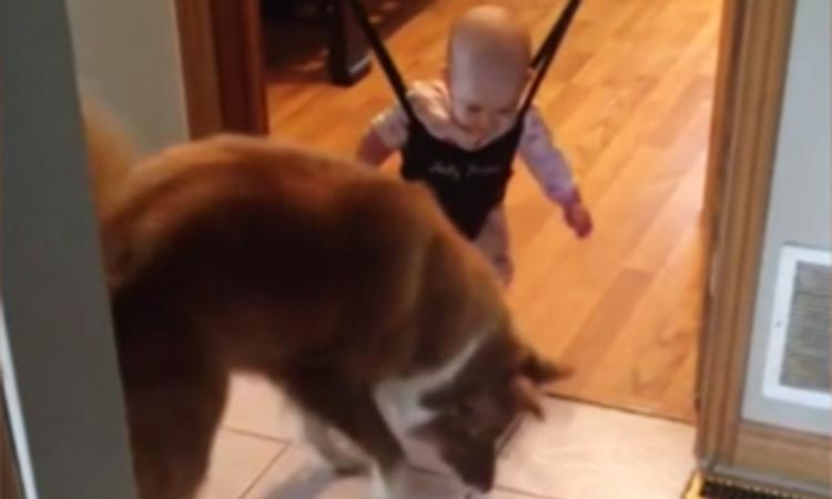 Lief: springende hond bezorgt baby slappe lach