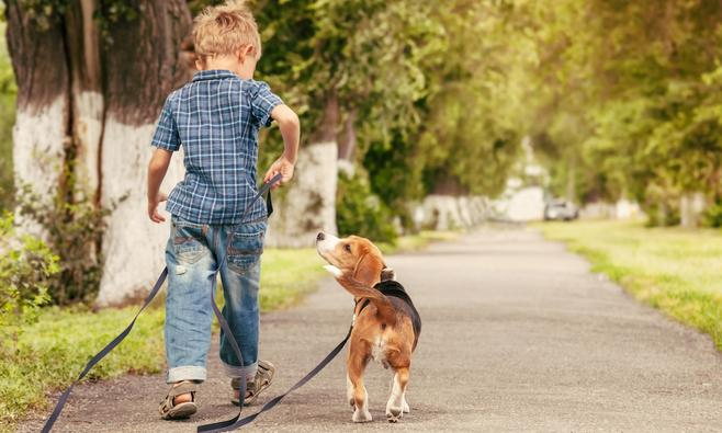 Eva vindt: alle honden aan de lijn!