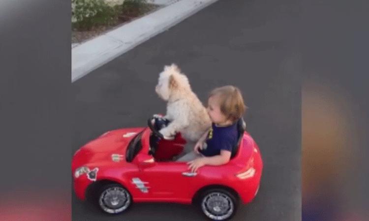 Hond rijdt jongetje rond in speelgoedauto