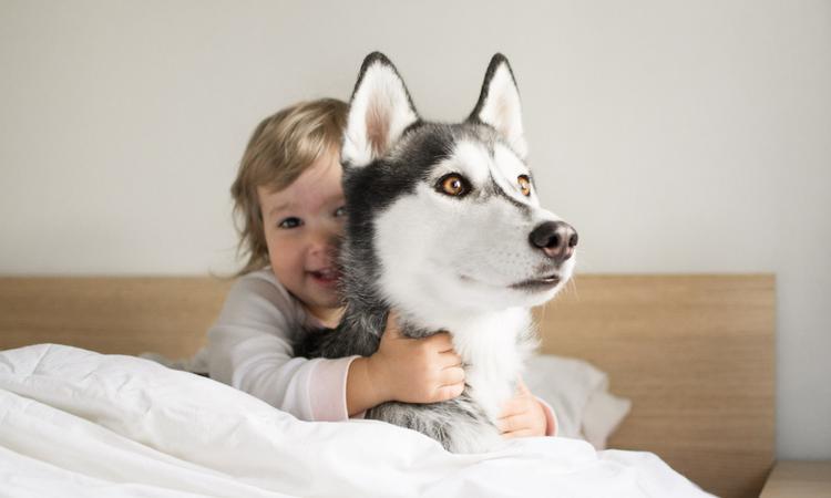 Té schattig: Peuter imiteert huil van zijn husky – en die doet gezellig mee