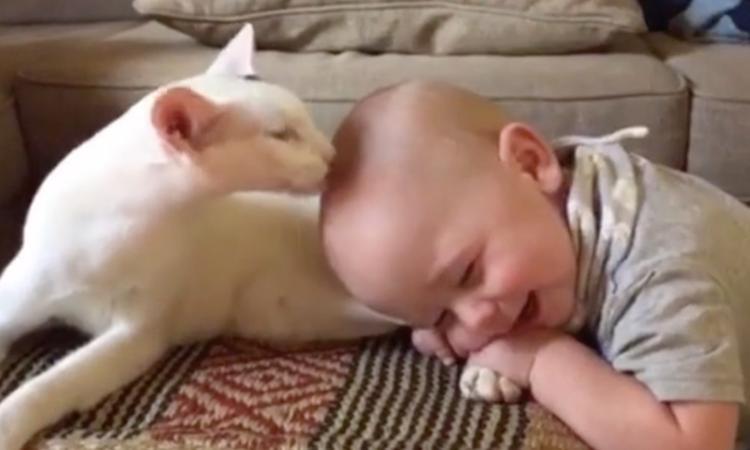 Geadopteerde kat direct vriendjes met baby