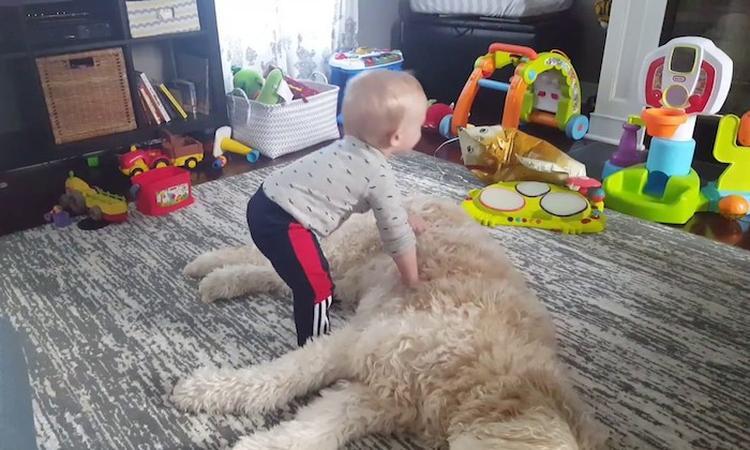 Baby ziet hond aan voor lekker dekentje