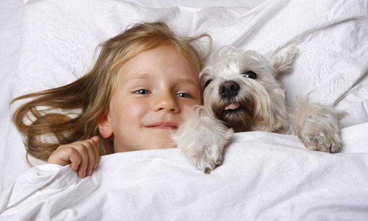 Allergisch voor katten, honden of andere huisdieren