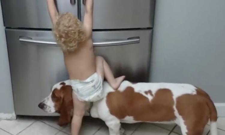 Hond geeft peuter een zetje in de zoektocht naar iets lekkers