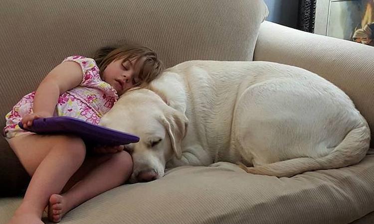 Hond ruikt op afstand of 4-jarig meisje medicijnen nodig heeft