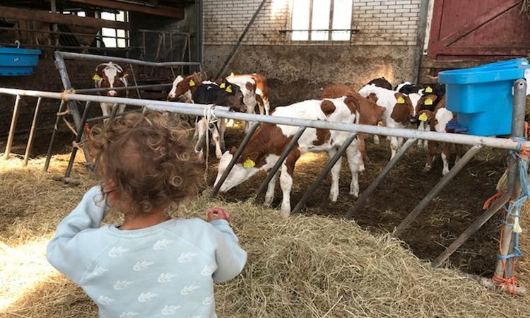 7x zó leuk en leerzaam is een bezoek aan de boerderij voor je kind