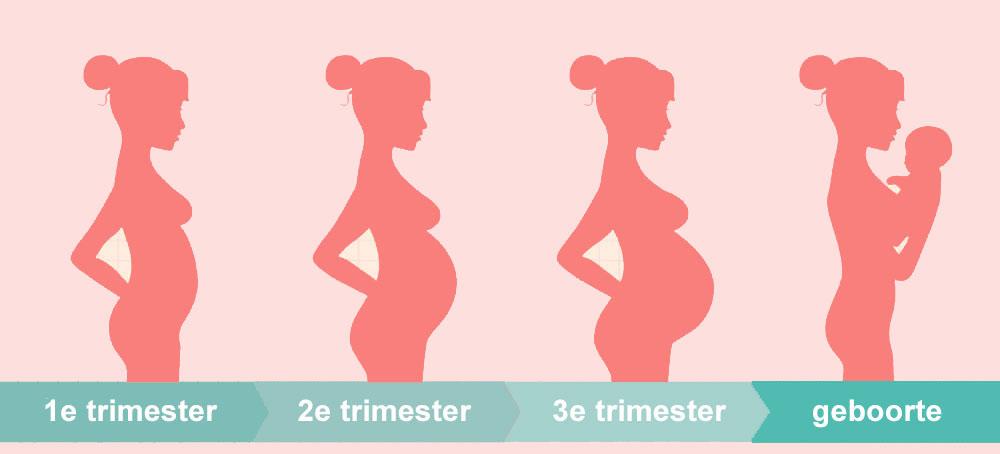 groei buik zwangerschap